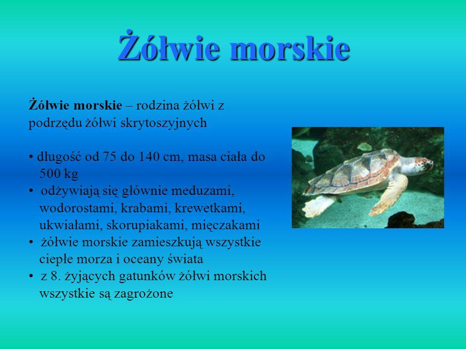 Żółwie morskie – rodzina żółwi z podrzędu żółwi skrytoszyjnych długość od 75 do 140 cm, masa ciała do 500 kg odżywiają się głównie meduzami, wodorosta