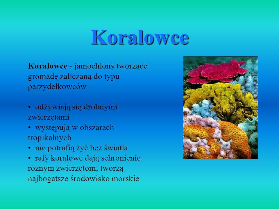 Koralowce Koralowce - jamochłony tworzące gromadę zaliczaną do typu parzydełkowców odżywiają się drobnymi zwierzętami występują w obszarach tropikalny