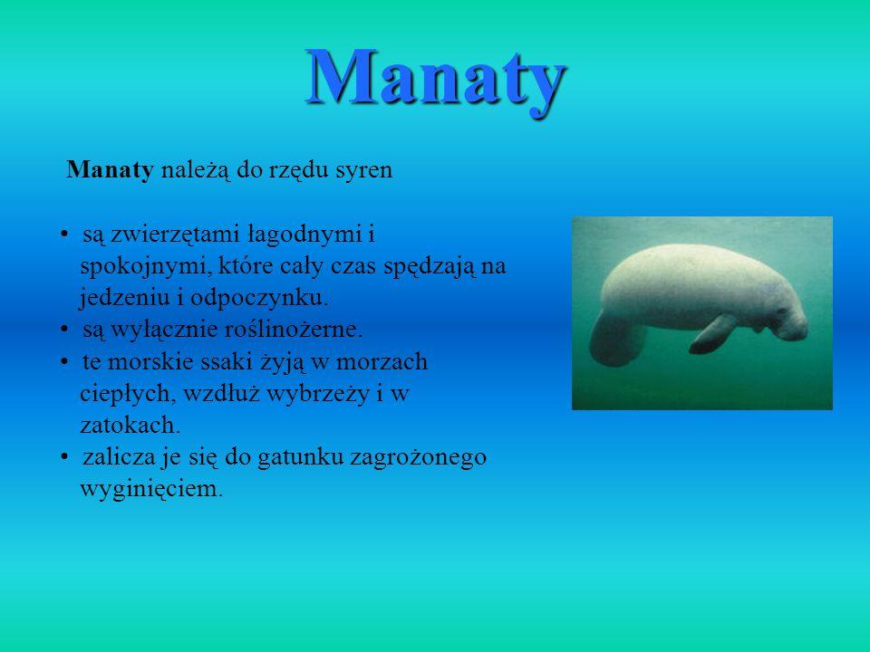 Manaty należą do rzędu syren są zwierzętami łagodnymi i spokojnymi, które cały czas spędzają na jedzeniu i odpoczynku. są wyłącznie roślinożerne. te m