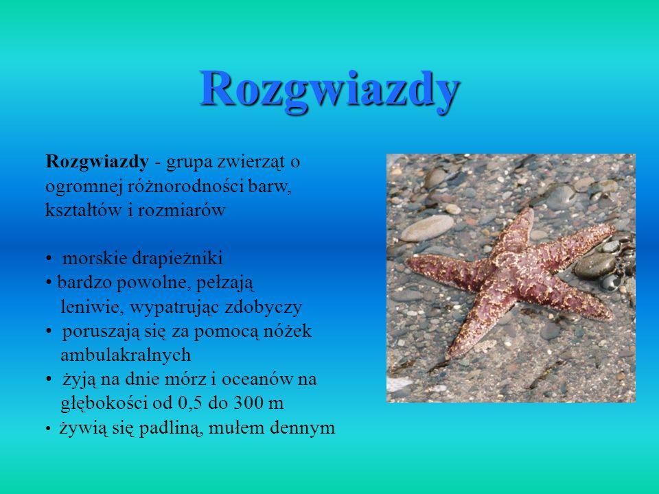 Rozgwiazdy Rozgwiazdy - grupa zwierząt o ogromnej różnorodności barw, kształtów i rozmiarów morskie drapieżniki bardzo powolne, pełzają leniwie, wypat