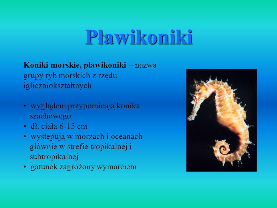 Koniki morskie, pławikoniki – nazwa grupy ryb morskich z rzędu igliczniokształtnych wyglądem przypominają konika szachowego dł. ciała 6-15 cm występuj