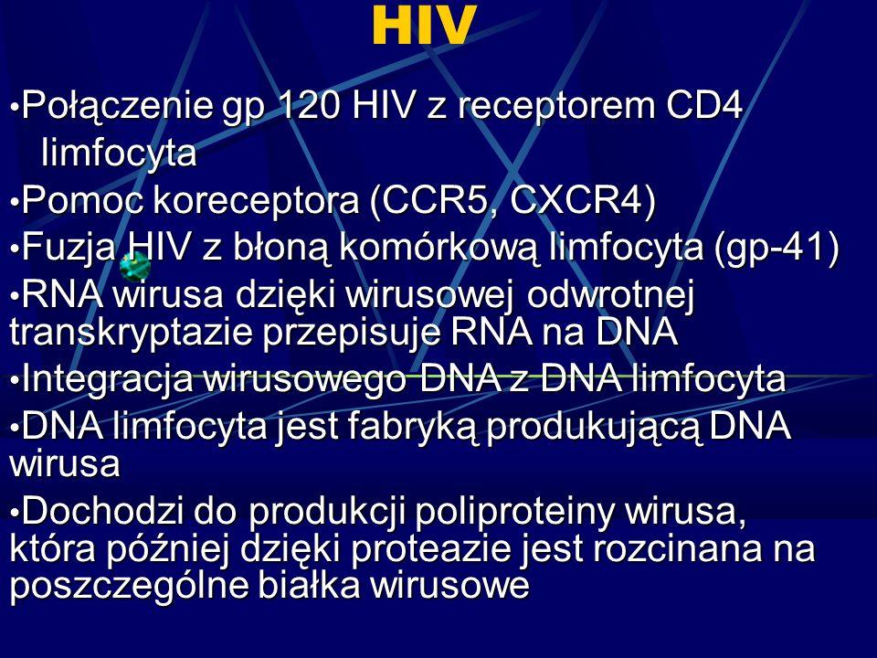 HIV Połączenie gp 120 HIV z receptorem CD4 Połączenie gp 120 HIV z receptorem CD4 limfocyta limfocyta Pomoc koreceptora (CCR5, CXCR4) Pomoc koreceptora (CCR5, CXCR4) Fuzja HIV z błoną komórkową limfocyta (gp-41) Fuzja HIV z błoną komórkową limfocyta (gp-41) RNA wirusa dzięki wirusowej odwrotnej transkryptazie przepisuje RNA na DNA RNA wirusa dzięki wirusowej odwrotnej transkryptazie przepisuje RNA na DNA Integracja wirusowego DNA z DNA limfocyta Integracja wirusowego DNA z DNA limfocyta DNA limfocyta jest fabryką produkującą DNA wirusa DNA limfocyta jest fabryką produkującą DNA wirusa Dochodzi do produkcji poliproteiny wirusa, która później dzięki proteazie jest rozcinana na poszczególne białka wirusowe Dochodzi do produkcji poliproteiny wirusa, która później dzięki proteazie jest rozcinana na poszczególne białka wirusowe