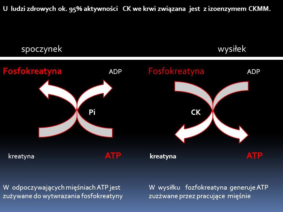 U ludzi zdrowych ok. 95% aktywności CK we krwi związana jest z izoenzymem CKMM. spoczynek wysiłek kreatyna ATP Fosfokreatyna ADP PiCK W odpoczywającyc