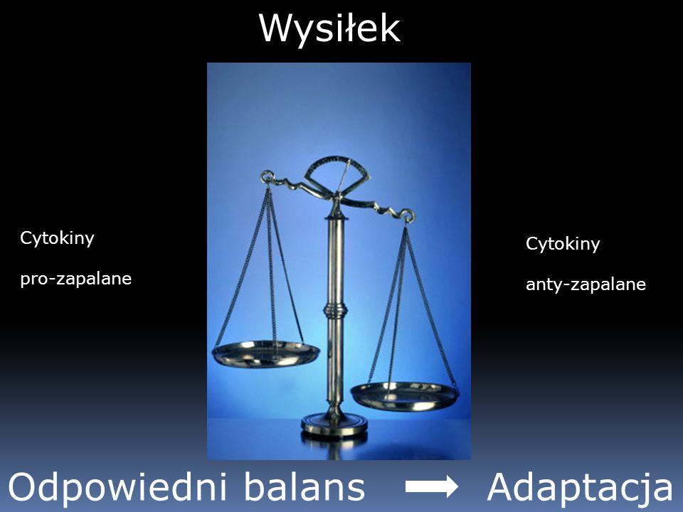 Wysiłek Cytokiny pro-zapalane Cytokiny anty-zapalane Odpowiedni balans Adaptacja