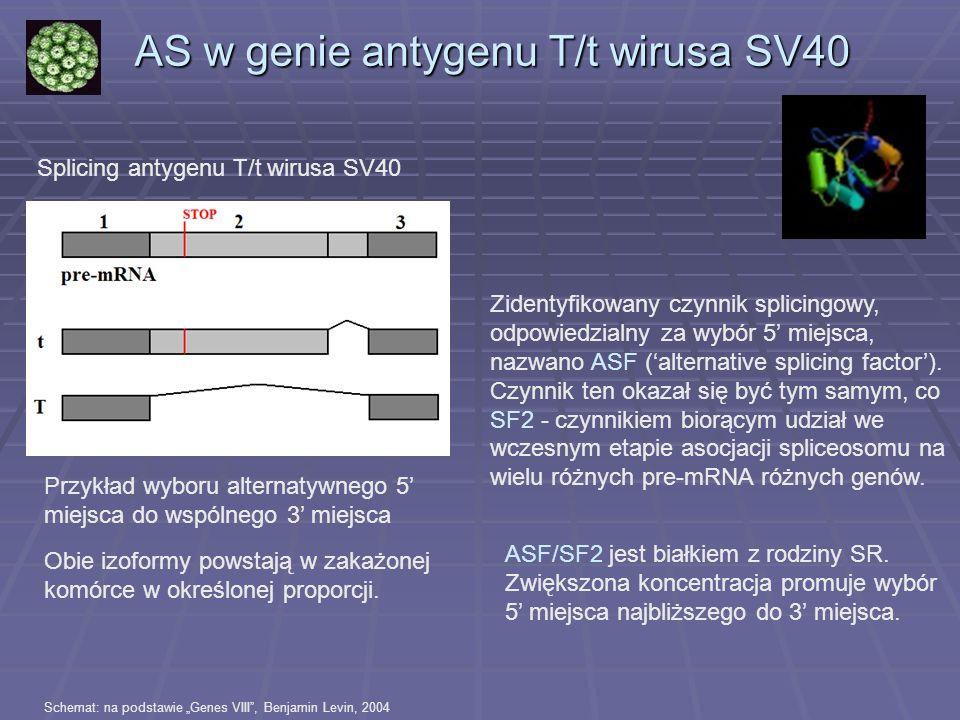 Splicing antygenu T/t wirusa SV40 Obie izoformy powstają w zakażonej komórce w określonej proporcji. AS w genie antygenu T/t wirusa SV40 Zidentyfikowa