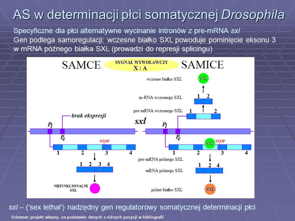 AS w determinacji płci somatycznej Drosophila Specyficzne dla płci alternatywne wycinanie intronów z pre-mRNA sxl Gen podlega samoregulacji: wczesne b