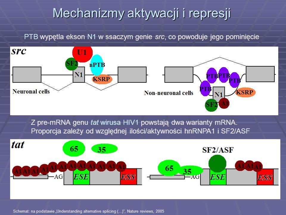 Mechanizmy aktywacji i represji Schemat: na podstawie Understanding alternative splicing (…), Nature reviews, 2005 PTB wypętla ekson N1 w ssaczym geni