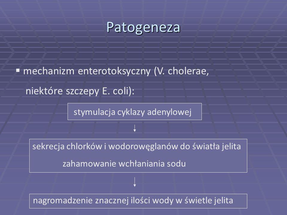mechanizm enterotoksyczny (V. cholerae, niektóre szczepy E. coli): stymulacja cyklazy adenylowej sekrecja chlorków i wodorowęglanów do światła jelita