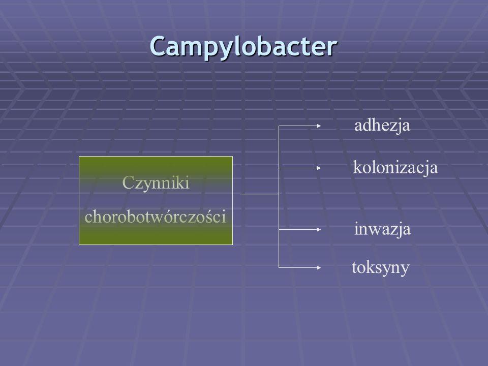 Campylobacter adhezja kolonizacja inwazja toksyny Czynniki chorobotwórczości