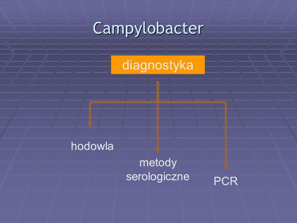Campylobacter diagnostyka hodowla metody serologiczne PCR