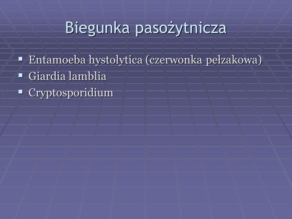 Biegunka pasożytnicza Entamoeba hystolytica (czerwonka pełzakowa) Entamoeba hystolytica (czerwonka pełzakowa) Giardia lamblia Giardia lamblia Cryptosp