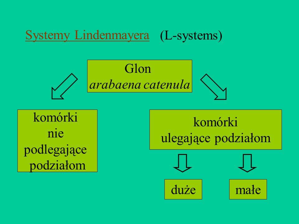 (L-systems) Glon arabaena catenula komórki nie podlegające podziałom komórki ulegające podziałom dużemałe Systemy Lindenmayera