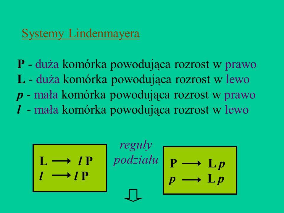 P - duża komórka powodująca rozrost w prawo L - duża komórka powodująca rozrost w lewo p - mała komórka powodująca rozrost w prawo l - mała komórka po