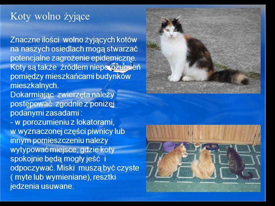 Koty wolno żyjące Znaczne ilości wolno żyjących kotów na naszych osiedlach mogą stwarzać potencjalne zagrożenie epidemiczne. Koty są także źródłem nie