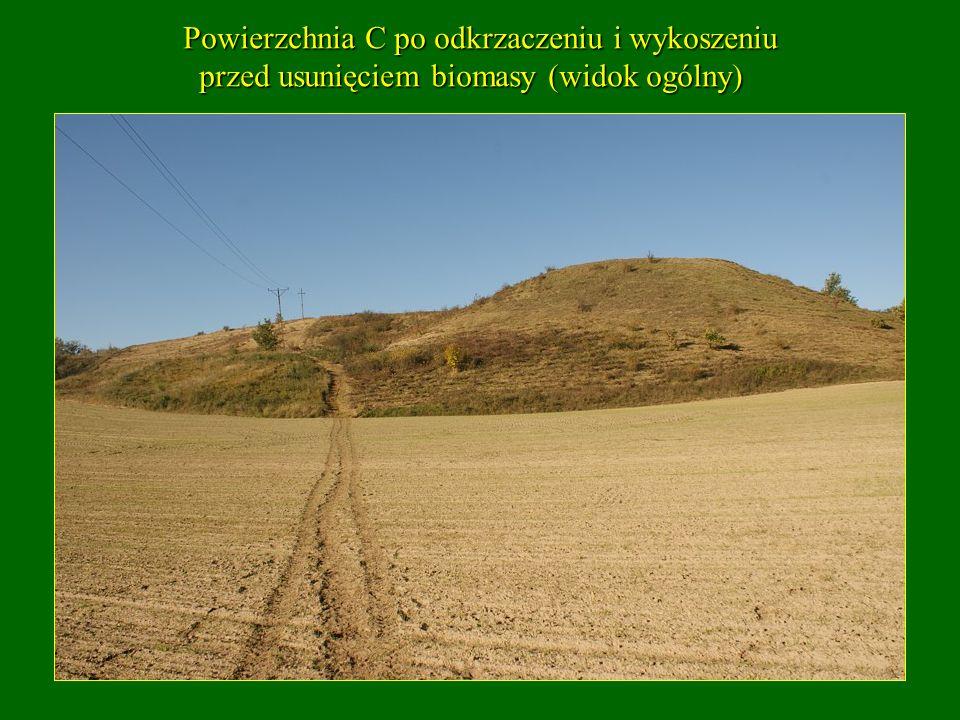Powierzchnia C po odkrzaczeniu i wykoszeniu przed usunięciem biomasy (widok ogólny) przed usunięciem biomasy (widok ogólny)