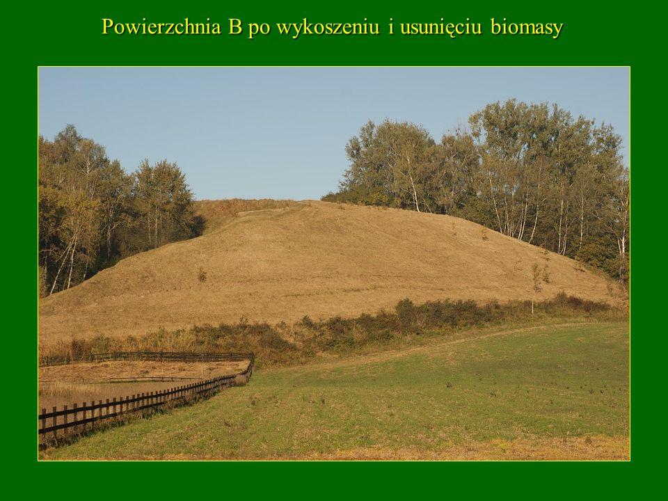 Powierzchnia B po wykoszeniu i usunięciu biomasy