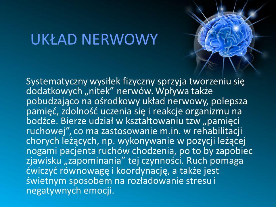 UKŁAD NERWOWY Systematyczny wysiłek fizyczny sprzyja tworzeniu się dodatkowych nitek nerwów. Wpływa także pobudzająco na ośrodkowy układ nerwowy, pole
