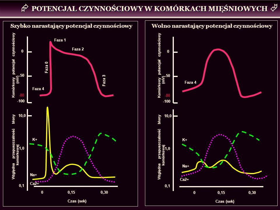Faza 4 Faza 0 Faza 1 Faza 2 Faza 3 Szybko narastający potencjał czynnościowy K+ Na+ Ca2+ Czas (sek) 0,15 0 0 0,30 Wolno narastający potencjał czynnośc