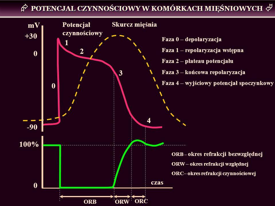 POTENCJAL CZYNNOŚCIOWY W KOMÓRKACH MIĘŚNIOWYCH 0 1 2 3 4 Potencjał czynnościowy Skurcz mięśnia -90 +30 0 mV 100% 0 ORB ORW czas ORC Faza 0 – depolaryz
