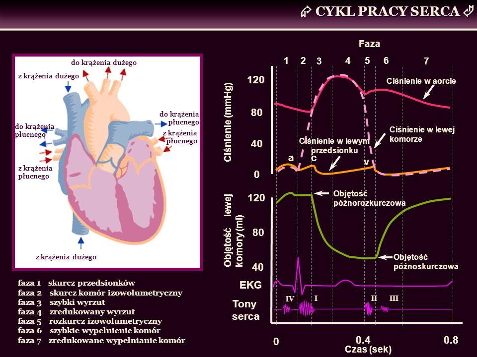 CYKL PRACY SERCA do krążenia płucnego z krążenia dużego z krążenia płucnego do krążenia dużego z krążenia dużego do krążenia płucnego z krążenia płucn