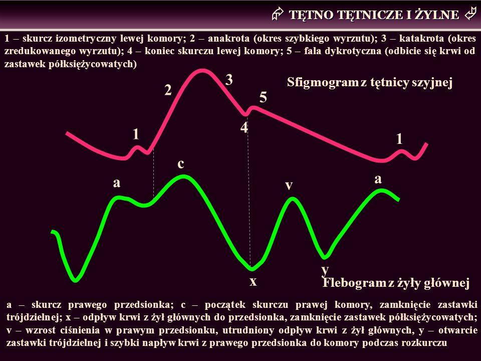TĘTNO TĘTNICZE I ŻYLNE 1 – skurcz izometryczny lewej komory; 2 – anakrota (okres szybkiego wyrzutu); 3 – katakrota (okres zredukowanego wyrzutu); 4 –