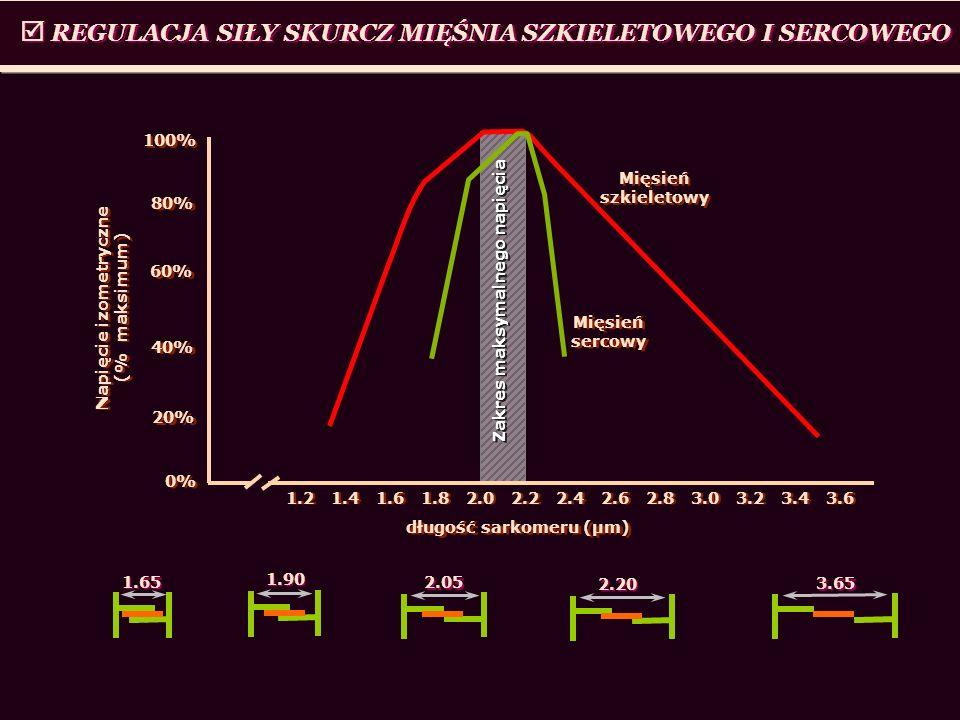 REGULACJA SIŁY SKURCZ MIĘŚNIA SZKIELETOWEGO I SERCOWEGO 1.2 1.4 1.6 1.8 2.0 2.2 2.4 2.6 2.8 3.0 3.2 3.4 3.6 100% 40% 0% długość sarkomeru (μm) 80% 20%