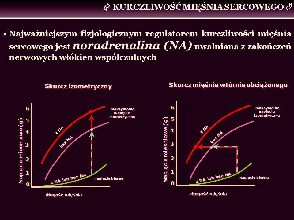 KURCZLIWOŚĆ MIĘŚNIA SERCOWEGO Najważniejszym fizjologicznym regulatorem kurczliwości mięśnia sercowego jest noradrenalina (NA) uwalniana z zakończeń n