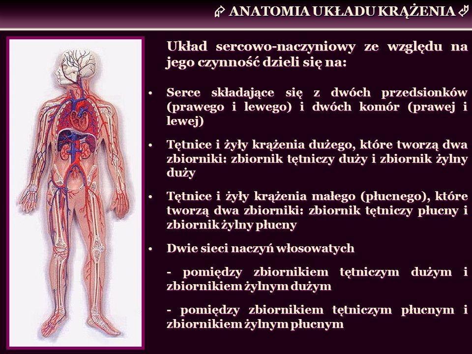 Układ sercowo-naczyniowy ze względu na jego czynność dzieli się na: Serce składające się z dwóch przedsionków (prawego i lewego) i dwóch komór (prawej