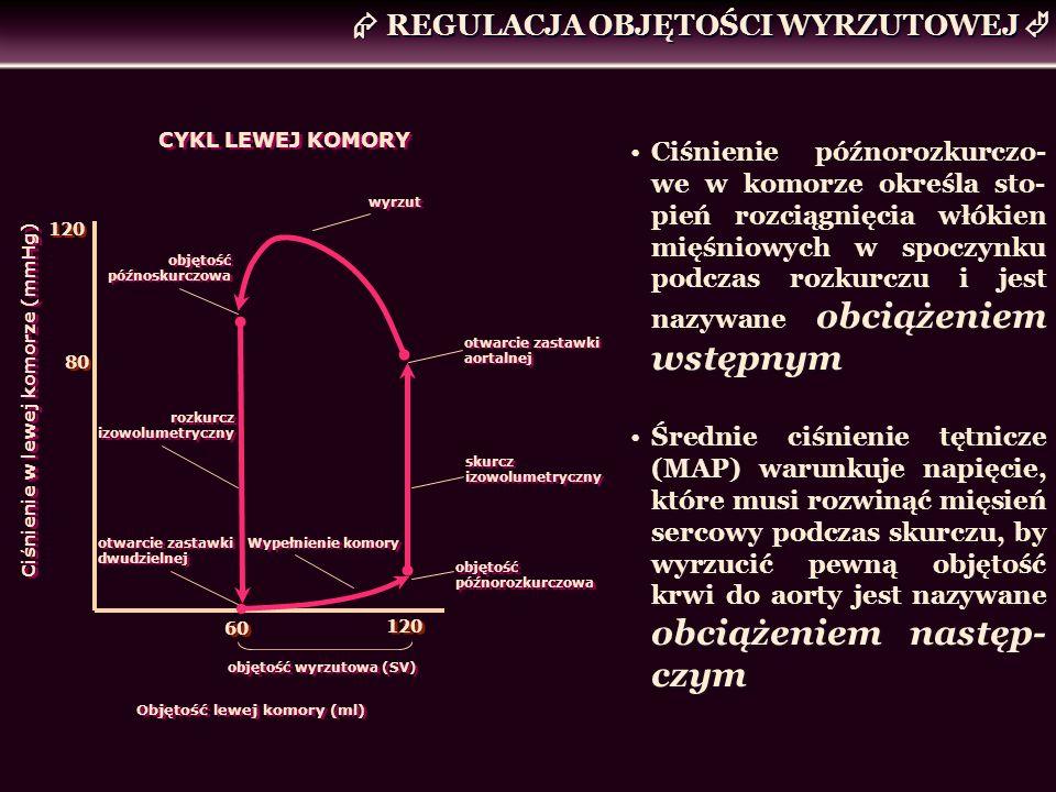 REGULACJA OBJĘTOŚCI WYRZUTOWEJ objętość późnorozkurczowa skurcz izowolumetryczny otwarcie zastawki aortalnej 80 Objętość lewej komory (ml) 60 120 Ciśn
