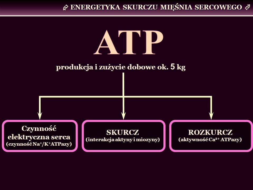ENERGETYKA SKURCZU MIĘŚNIA SERCOWEGO SKURCZ (interakcja aktyny i miozyny) SKURCZ (interakcja aktyny i miozyny) Czynność elektryczna serca (czynność Na