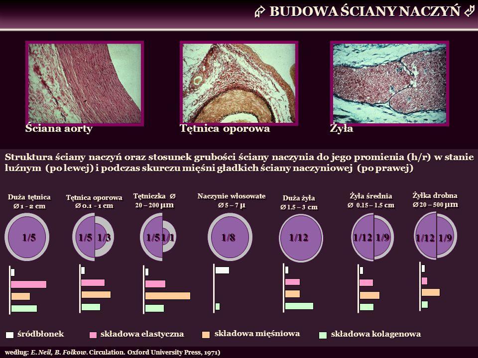 Ściana aorty Tętnica oporowa Żyła Duża tętnica 1 - 2 cm Tętnica oporowa 0.1 - 1 cm Tętniczka 20 – 200 μm Naczynie włosowate 5 – 7 μ Duża żyła 1.5 – 3