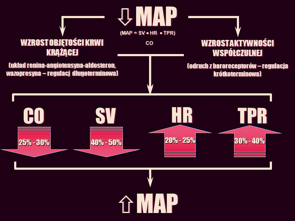 CO 25% - 30% SV 40% - 50% HR 20% - 25% TPR 30% - 40% MAP WZROST AKTYWNOŚCI WSPÓŁCZULNEJ (odruch z baroreceptorów – regulacja krótkoterminowa) WZROST A