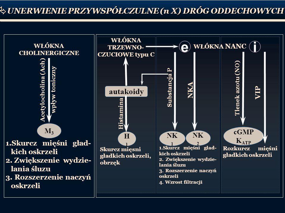 cGMP K ATP WŁÓKNA CHOLINERGICZNE WŁÓKNA TRZEWNO- CZUCIOWE typu C WŁÓKNA NANC 1.Skurcz mięśni gład- kich oskrzeli 2. Zwiększenie wydzie- lania śluzu 3.