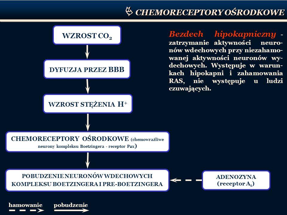 Bezdech hipokapniczny - zatrzymanie aktywności neuro- nów wdechowych przy niezahamo- wanej aktywności neuronów wy- dechowych. Występuje w warun- kach