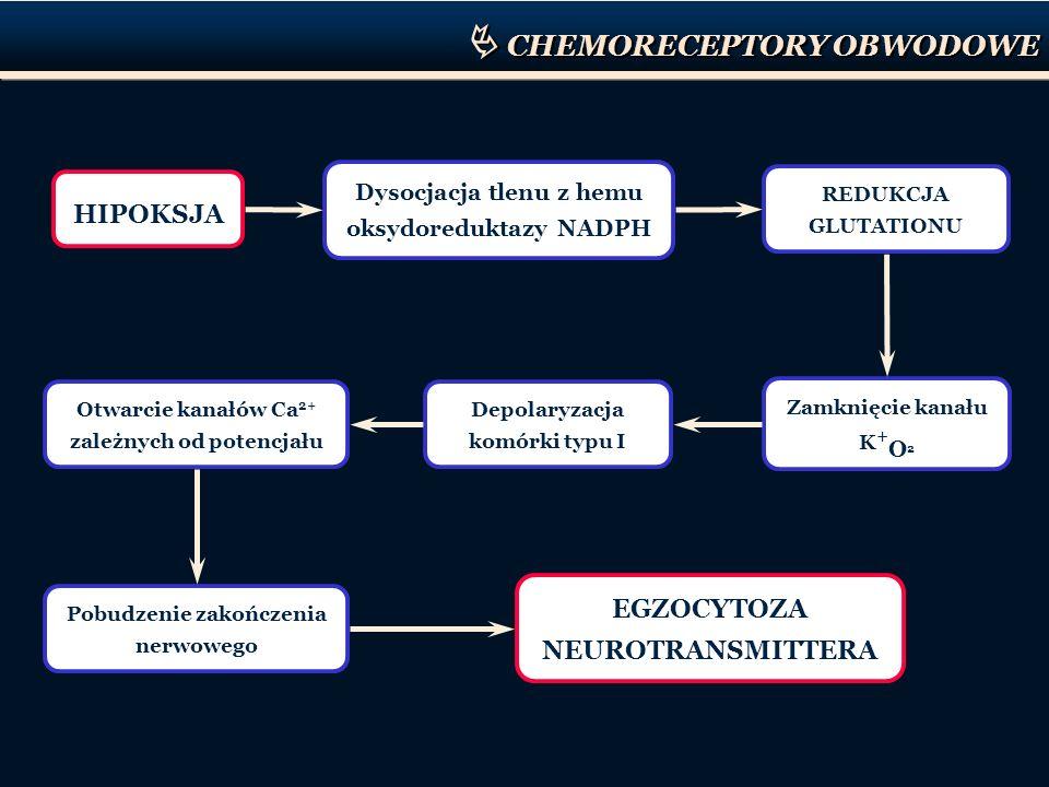 CHEMORECEPTORY OBWODOWE HIPOKSJA Dysocjacja tlenu z hemu oksydoreduktazy NADPH REDUKCJA GLUTATIONU Zamknięcie kanału K + O 2 Depolaryzacja komórki typ