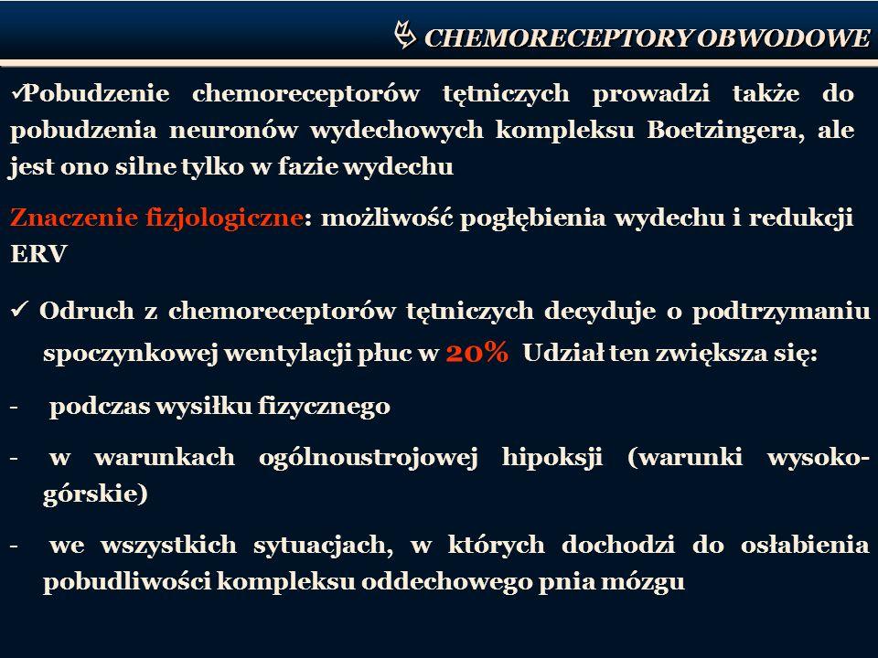CHEMORECEPTORY OBWODOWE Pobudzenie chemoreceptorów tętniczych prowadzi także do pobudzenia neuronów wydechowych kompleksu Boetzingera, ale jest ono si