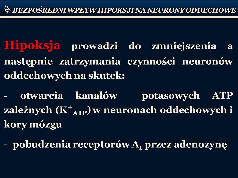 BEZPOŚREDNI WPŁYW HIPOKSJI NA NEURONY ODDECHOWE Hipoksja prowadzi do zmniejszenia a następnie zatrzymania czynności neuronów oddechowych na skutek: -