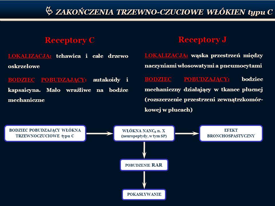 ZAKOŃCZENIA TRZEWNO-CZUCIOWE WŁÓKIEN typu C Receptory C LOKALIZACJA: tchawica i całe drzewo oskrzelowe BODZIEC POBUDZAJĄCY: autakoidy i kapsaicyna. Ma