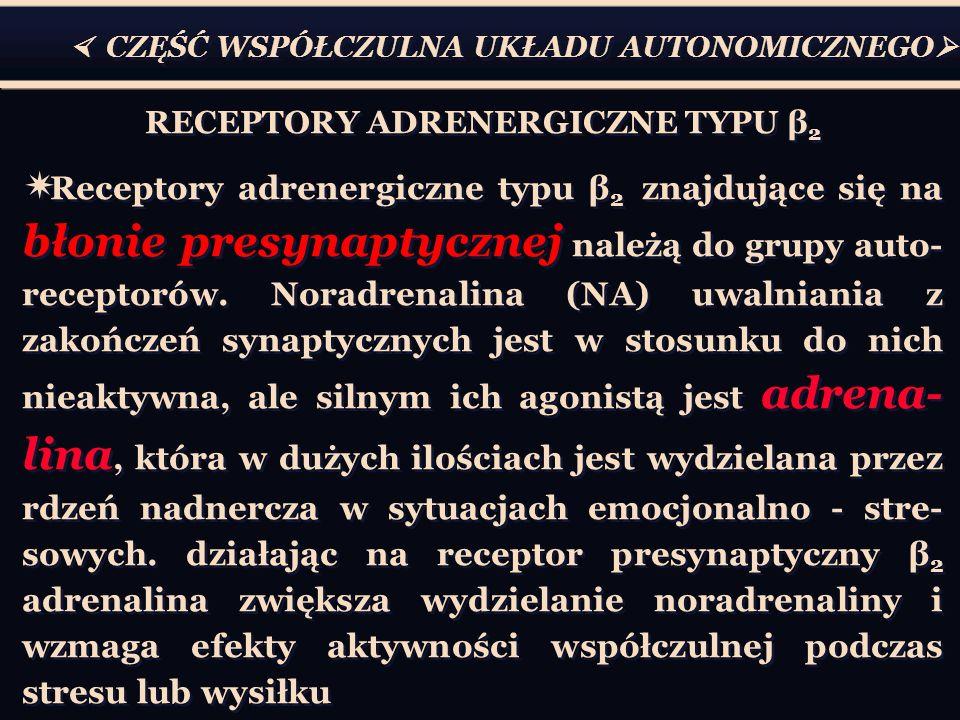 CZĘŚĆ WSPÓŁCZULNA UKŁADU AUTONOMICZNEGO RECEPTORY ADRENERGICZNE TYPU β 2 Receptory adrenergiczne typu β 2 znajdujące się na błonie presynaptycznej nal