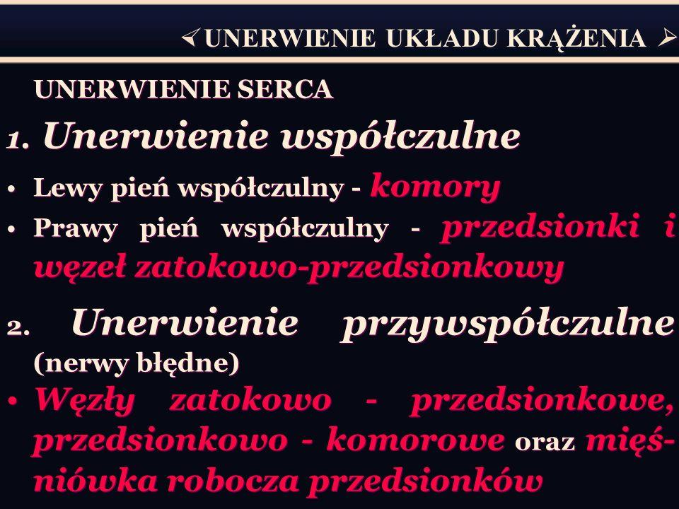 UNERWIENIE SERCA 1. Unerwienie współczulne Lewy pień współczulny - komory Prawy pień współczulny - przedsionki i węzeł zatokowo-przedsionkowy 2. Unerw