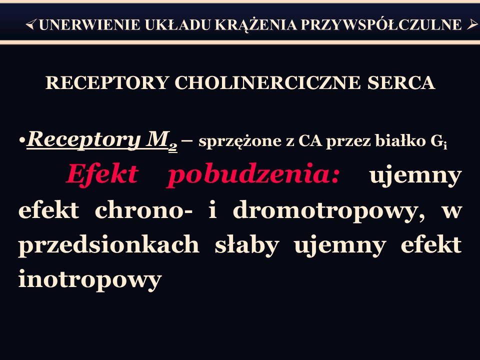 RECEPTORY CHOLINERCICZNE SERCA Receptory M 2 – sprzężone z CA przez białko G i Efekt pobudzenia: ujemny efekt chrono- i dromotropowy, w przedsionkach