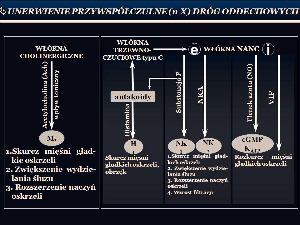 cGMP K ATP WŁÓKNA CHOLINERGICZNE WŁÓKNA TRZEWNO- CZUCIOWE typu C WŁÓKNA NANC 1.Skurcz mięśni gład- kie oskrzeli 2. Zwiększenie wydzie- lania śluzu 3.