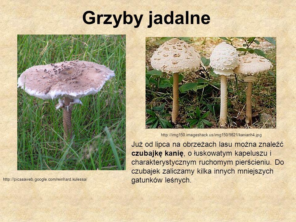Zatrucie poprzez zjedzenie grzybów trujących np.muchomora jadowitego.