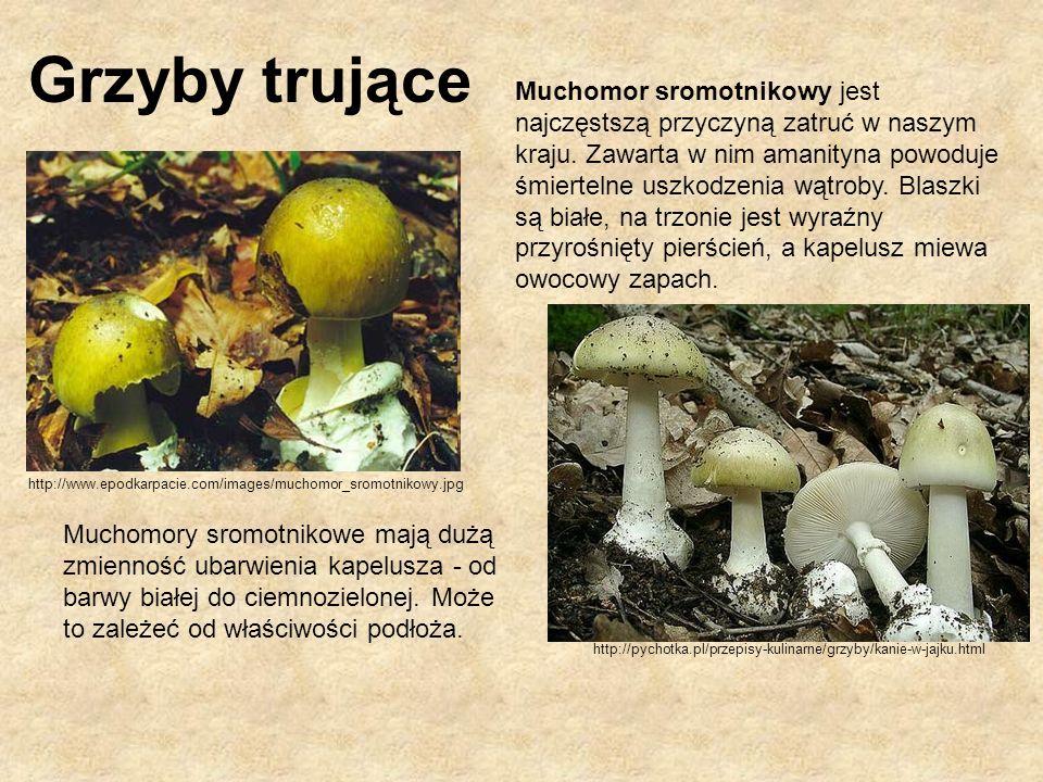 http://www.bio-forum.pl/messages/33/24753.jpg http://www.lublin.lasy.gov.pl/att/biala/grzyby/d_DSC_0198.jpg Maślanka wiązkowa jest pospolitym grzybem zawierającym toksyny podobne do muchomora sromotnikowego.