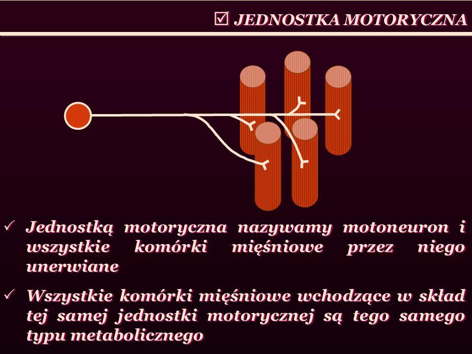 Jednostką motoryczna nazywamy motoneuron i wszystkie komórki mięśniowe przez niego unerwiane Wszystkie komórki mięśniowe wchodzące w skład tej samej j