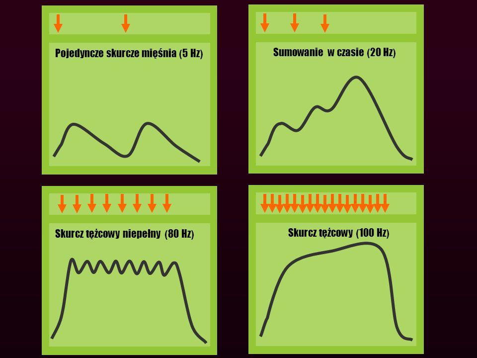 Pojedyncze skurcze mięśnia ( 5 Hz ) Sumowanie w czasie ( 20 Hz ) Skurcz tężcowy niepełny ( 80 Hz ) Skurcz tężcowy ( 100 Hz )