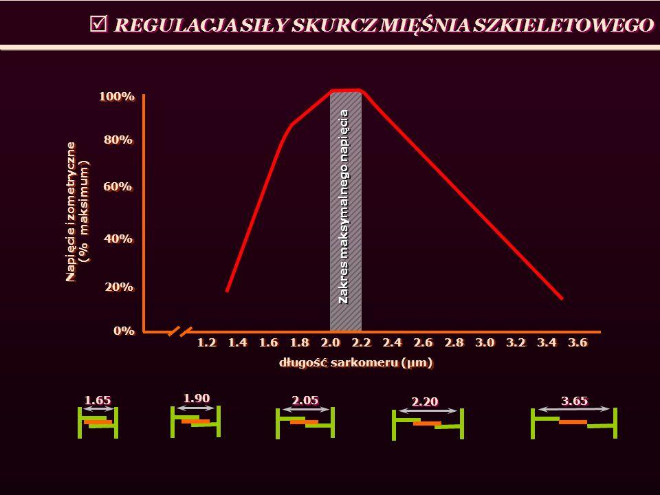 REGULACJA SIŁY SKURCZ MIĘŚNIA SZKIELETOWEGO 1.2 1.4 1.6 1.8 2.0 2.2 2.4 2.6 2.8 3.0 3.2 3.4 3.6 100% 40% 0% długość sarkomeru (μm) 80% 20% 60% Napięci