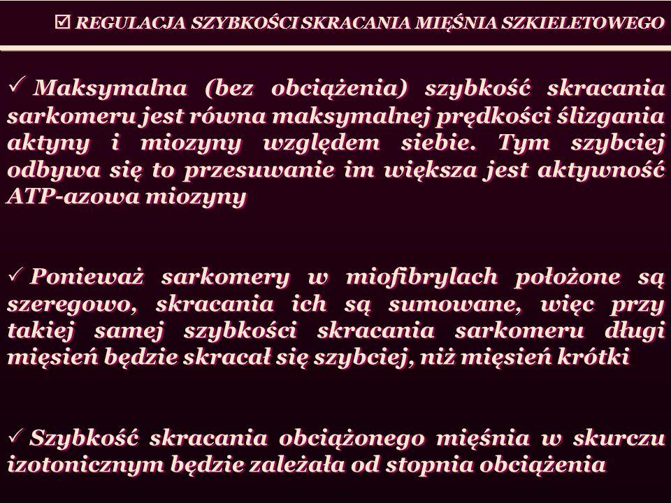 REGULACJA SZYBKOŚCI SKRACANIA MIĘŚNIA SZKIELETOWEGO Maksymalna (bez obciążenia) szybkość skracania sarkomeru jest równa maksymalnej prędkości ślizgani