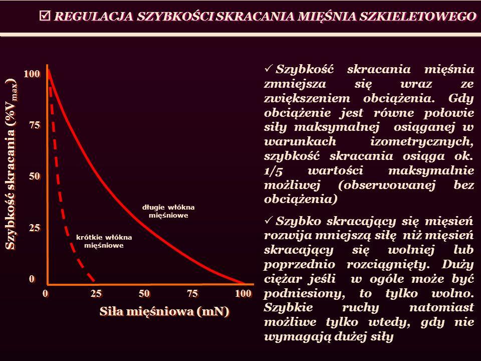 REGULACJA SZYBKOŚCI SKRACANIA MIĘŚNIA SZKIELETOWEGO 0255075100 Szybkość skracania (%V max ) Siła mięśniowa (mN) 100 75 50 25 0 100 75 50 25 0 długie w