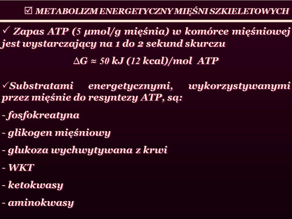 METABOLIZM ENERGETYCZNY MIĘŚNI SZKIELETOWYCH Zapas ATP ( 5 μmol/g mięśnia) w komórce mięśniowej jest wystarczający na 1 do 2 sekund skurczu G 50 kJ (